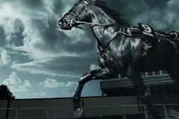 Türi valla karikavõistlused koolisõidus - Särevere ratsaväljak